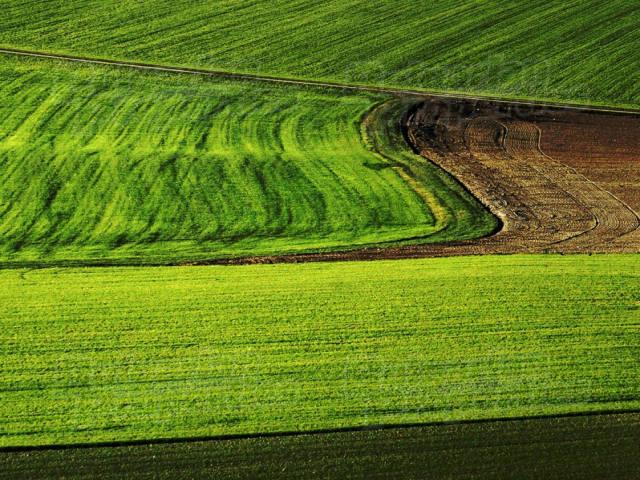 Аграрии в регионах получат 5 млрд субсидий на страхование