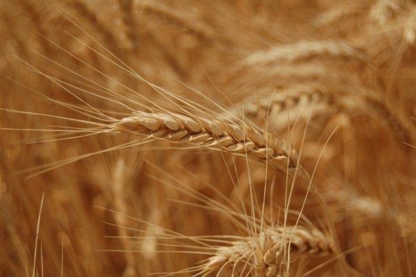 НСА согласовал новые правила сельхозстрахования со всеми органами