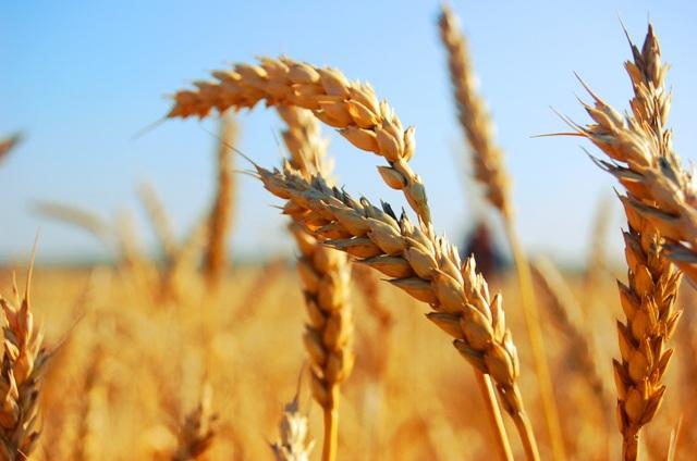 Агрострахование могут выделить из единой субсидии