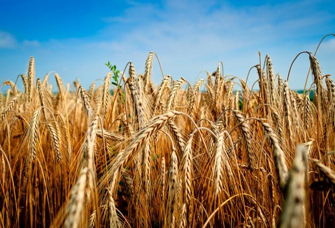 Агрострахование будет осуществляться по новому принципу
