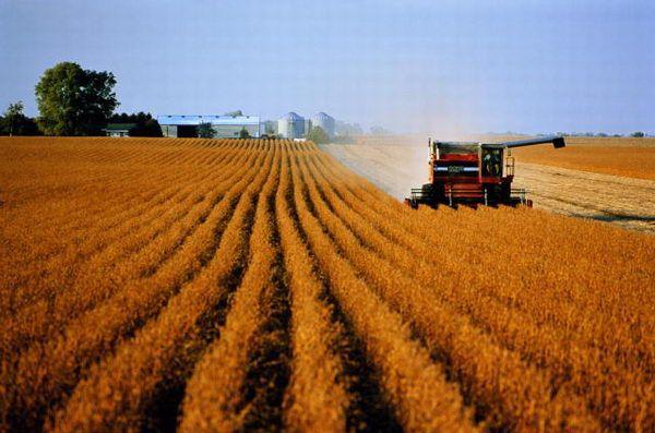 Госплан по страхованию в растениеводстве выполнен только на 20%