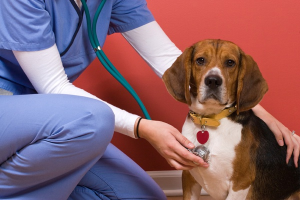 Российские страховщики запустили ДМС для домашних животных