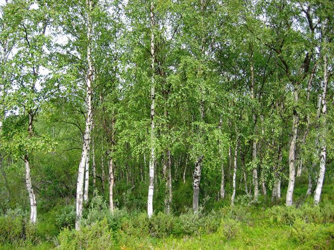 В Правительстве предложили ввести обязательное страхование леса