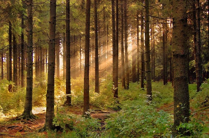 Депутаты настаивают на принятии закона о страховании лесных угодий