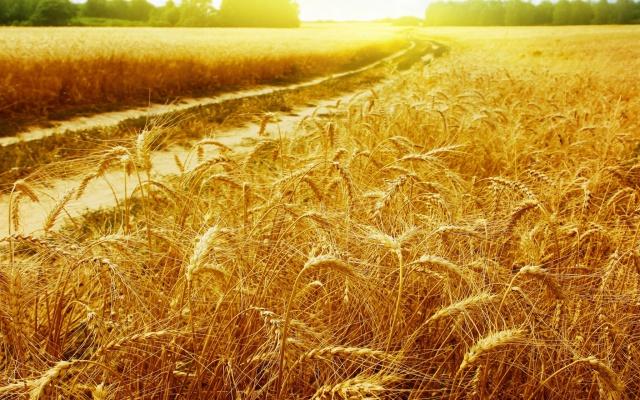 Объем выплат в агростраховании в 2012-2015 годах составил 3,6 млрд руб.